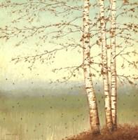 Golden Birch II with Blue Sky Fine-Art Print