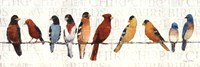 The Usual Suspects - Birds on a Wire Fine-Art Print