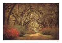 Road Lined With Oaks & Flowers Fine-Art Print