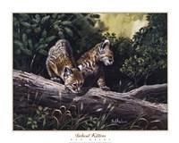 Bobcat Kittens Fine-Art Print
