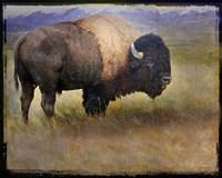 Bison Portrait II Fine-Art Print