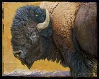 Bison Portrait III Fine-Art Print