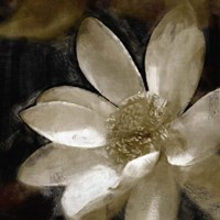 Bronze Lily I Fine-Art Print