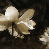 Bronze Lily II Fine-Art Print