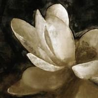 Bronze Lily V Fine-Art Print