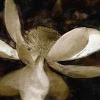Bronze Lily VI Fine-Art Print