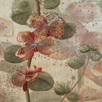 Desert Botanicals I Fine-Art Print