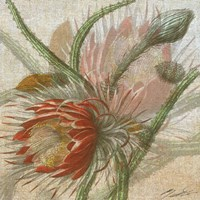 Desert Botanicals II Fine-Art Print