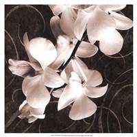 Orchid & Swirls I Fine-Art Print