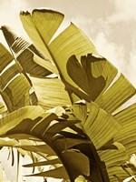 Palm Fronds I Fine-Art Print