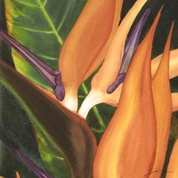 Bird Of Paradise Tile I Fine-Art Print