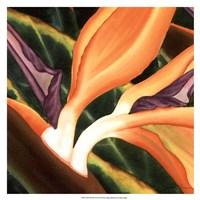 Bird Of Paradise Tile III Fine-Art Print