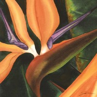Bird Of Paradise Tile IV Fine-Art Print