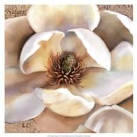 Magnolia Masterpiece II Fine-Art Print