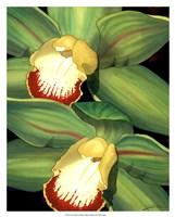 Lime Orchid I Fine-Art Print