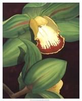 Lime Orchid II Fine-Art Print