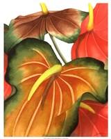 Anthuria I Fine-Art Print