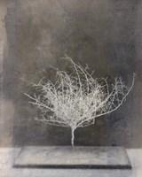 Desert Form VI Fine-Art Print