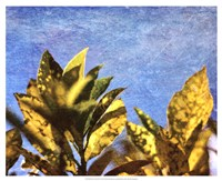 Sun Toward I Fine-Art Print