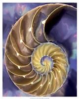 Shell Extraction II Fine-Art Print