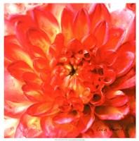 Painterly Flower II Fine-Art Print