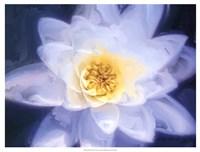 Painterly Flower III Fine-Art Print