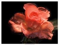 Painterly Flower IV Fine-Art Print
