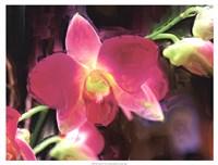 Painterly Flower V Fine-Art Print
