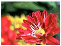 Painterly Flower VI Fine-Art Print