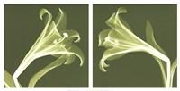 Lilies [Negative] Fine-Art Print