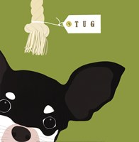Peek-A-Boo Chihuahua Fine-Art Print