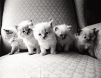 Five Kittens Fine-Art Print