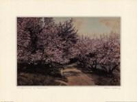 Disappearing Blossom Fine-Art Print