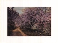 Blossom Bordered Fine-Art Print