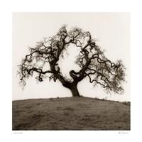 Hillside Oak Tree Fine-Art Print
