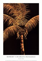 Palm Oro Fine-Art Print