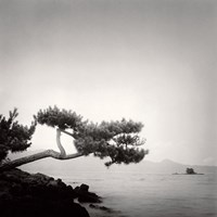 Two Branched Pine, Nakano Umi, Japan Fine-Art Print