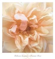 Promise Rose Fine-Art Print