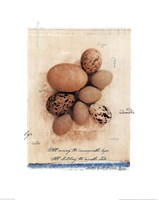 Eggs Fine-Art Print