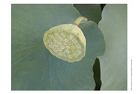 Lotus Detail VIII Fine-Art Print