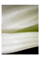 Bok Choy II Fine-Art Print