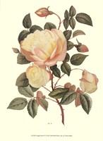 Vintage Roses IV Fine-Art Print