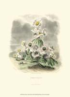 Le Fleur AnimT III Fine-Art Print