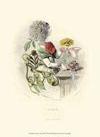 Le Fleur AnimT VII Fine-Art Print