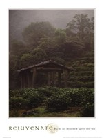 Rejuvenate - Tea Plantation Fine-Art Print