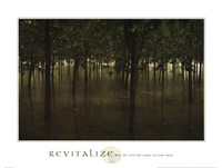 Revitalize - Forest Fine-Art Print