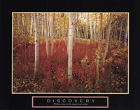 Discovery - Aspen Trees Fine-Art Print