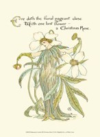 Shakespeare's Garden XII (Christmas Rose) Fine-Art Print