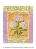 Sweet Hydrangea Fine-Art Print