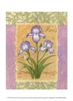 Sweet Iris Fine-Art Print